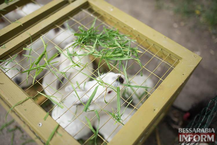 В Измаиле прошла уникальная выставка голубей и домашних животных (ФОТО)