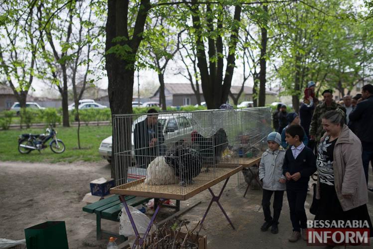 SME_9058 В Измаиле прошла уникальная выставка голубей и домашних животных (ФОТО)