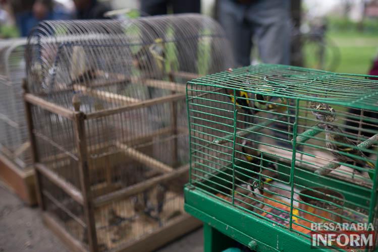 SME_9061 В Измаиле прошла уникальная выставка голубей и домашних животных (ФОТО)