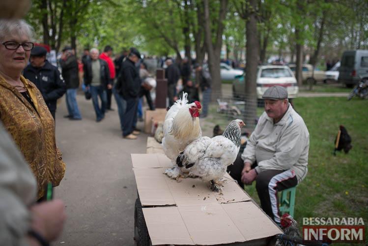 SME_9066 В Измаиле прошла уникальная выставка голубей и домашних животных (ФОТО)