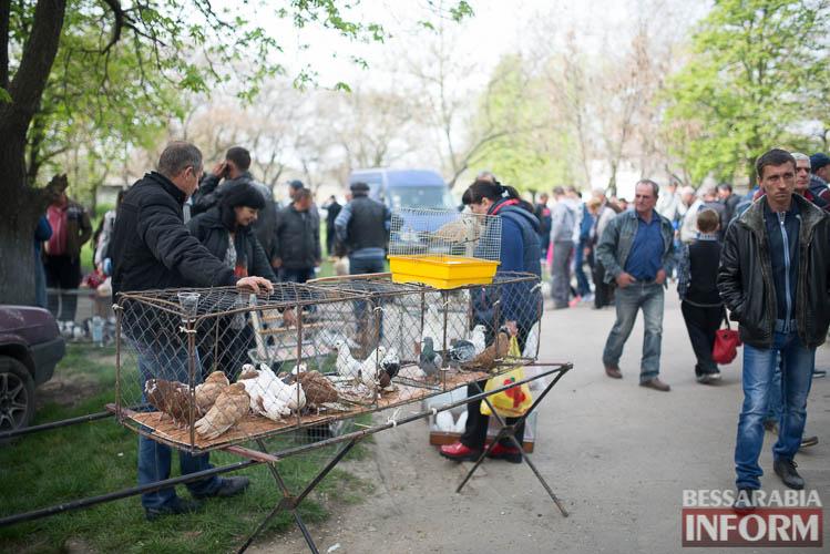 SME_9095 В Измаиле прошла уникальная выставка голубей и домашних животных (ФОТО)
