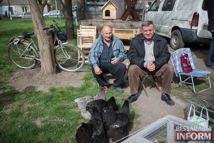 SME_9104 В Измаиле прошла уникальная выставка голубей и домашних животных (ФОТО)