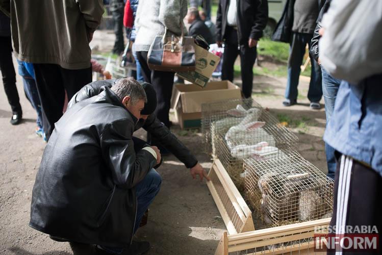 SME_9112 В Измаиле прошла уникальная выставка голубей и домашних животных (ФОТО)
