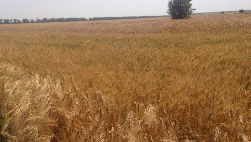 Измаильский р-н: в Новой Покровке вновь вспыхнула земельная война (фото, видео)