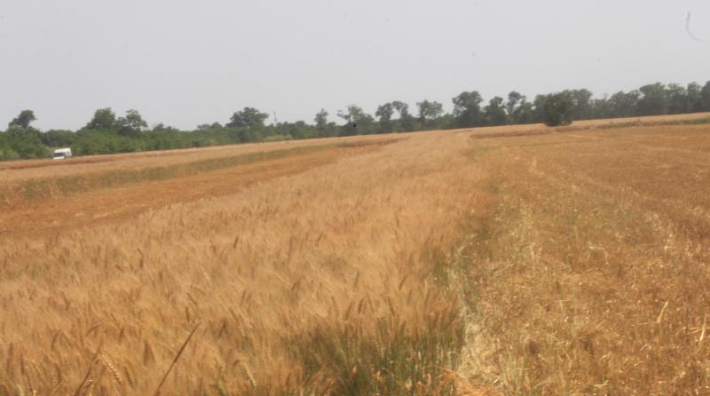 IMG_0344 Измаильский р-н: в Новой Покровке вновь вспыхнула земельная война (фото, видео)