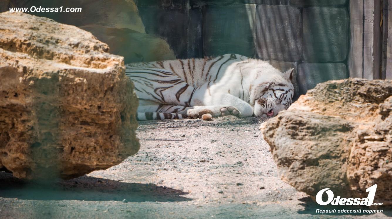 g-1-77089-10 В Одессе открылся уникальный зоологический парк (фото)
