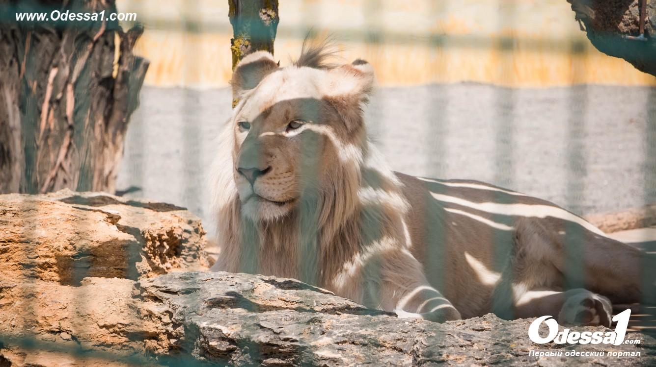 g-1-77089-6 В Одессе открылся уникальный зоологический парк (фото)