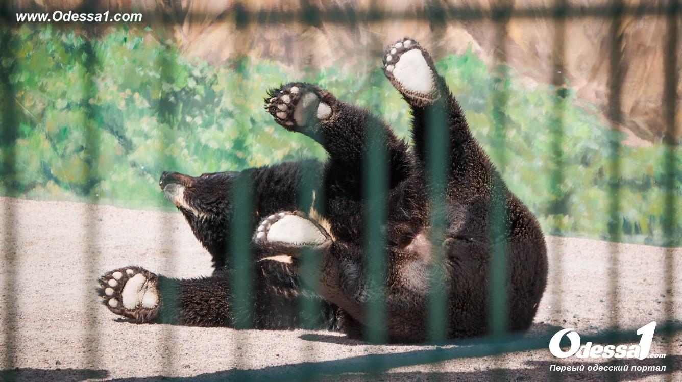 g-13-77089-1 В Одессе открылся уникальный зоологический парк (фото)