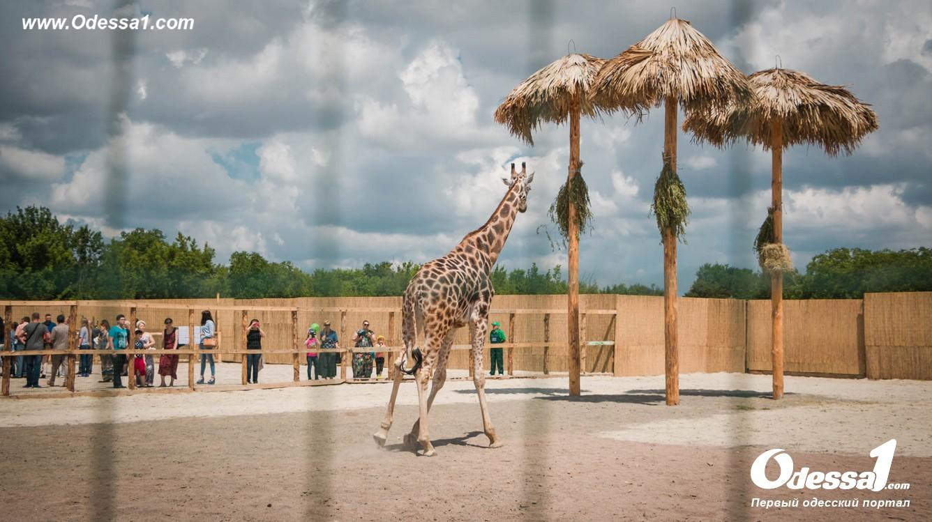 g-13-77089-13 В Одессе открылся уникальный зоологический парк (фото)