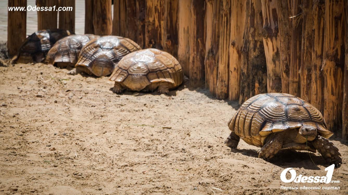 g-13-77089-3 В Одессе открылся уникальный зоологический парк (фото)