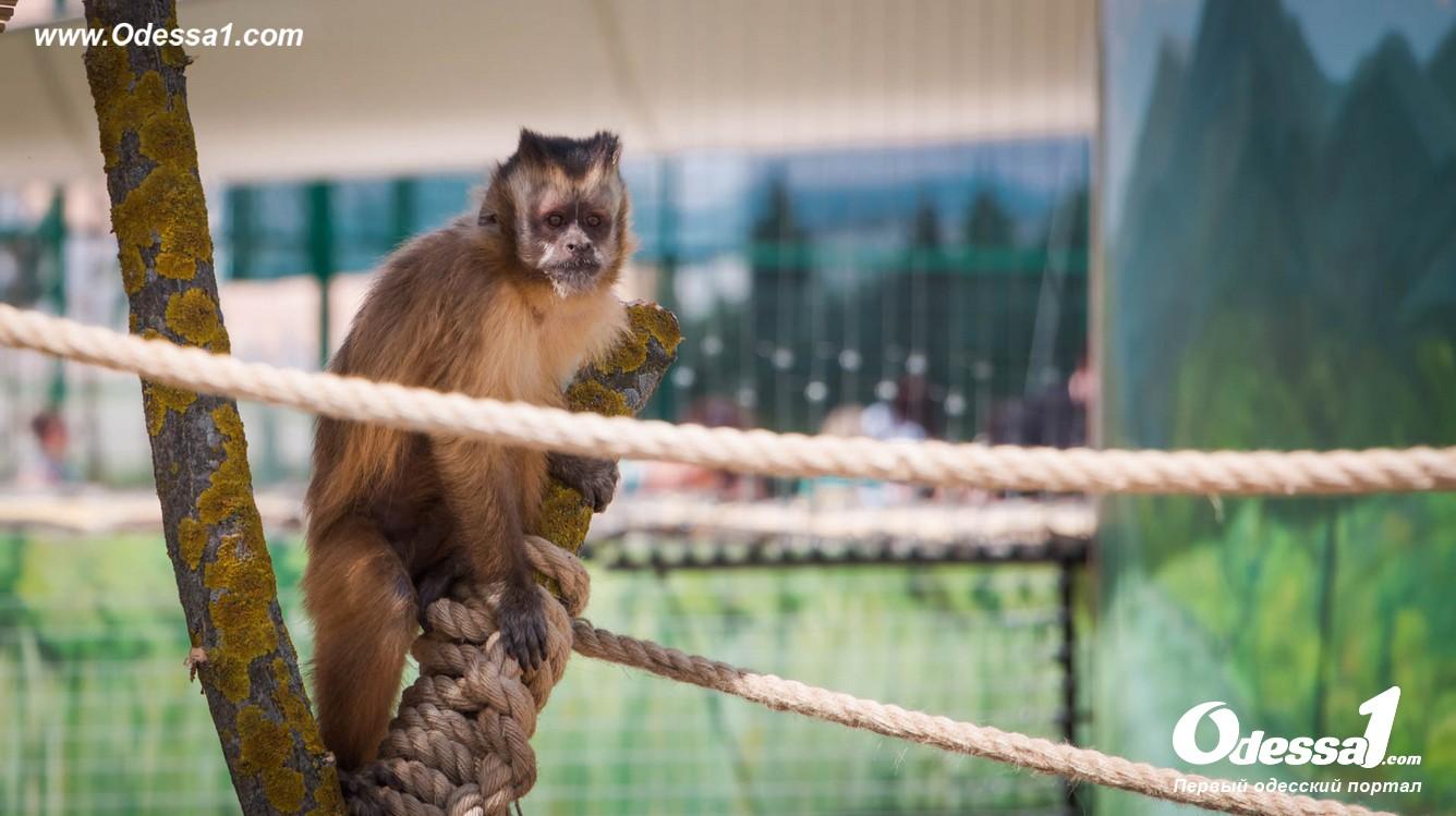 g-13-77089-8 В Одессе открылся уникальный зоологический парк (фото)