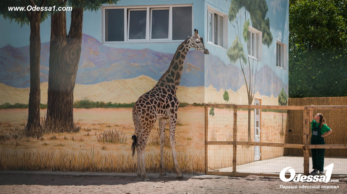 g-13-77089-9 В Одессе открылся уникальный зоологический парк (фото)