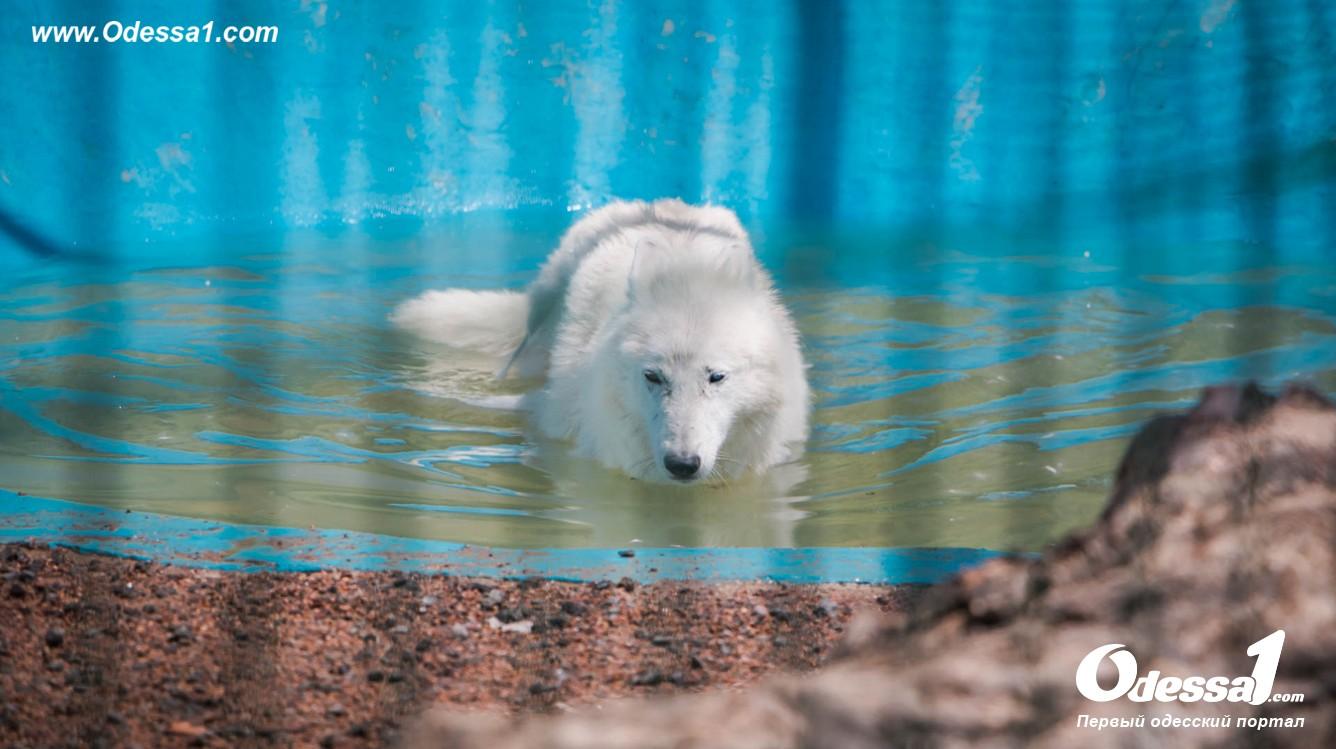 g-28-77089-11 В Одессе открылся уникальный зоологический парк (фото)