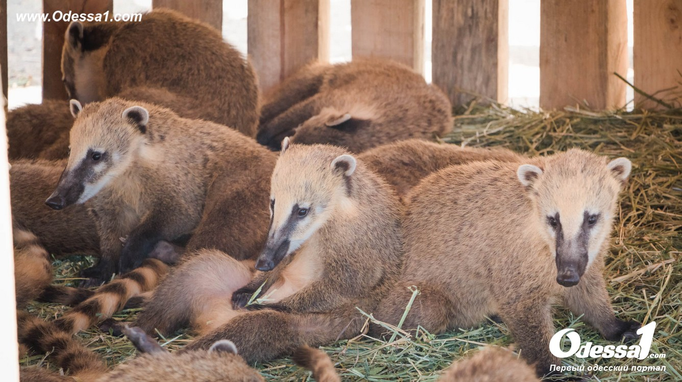 g-28-77089-14 В Одессе открылся уникальный зоологический парк (фото)