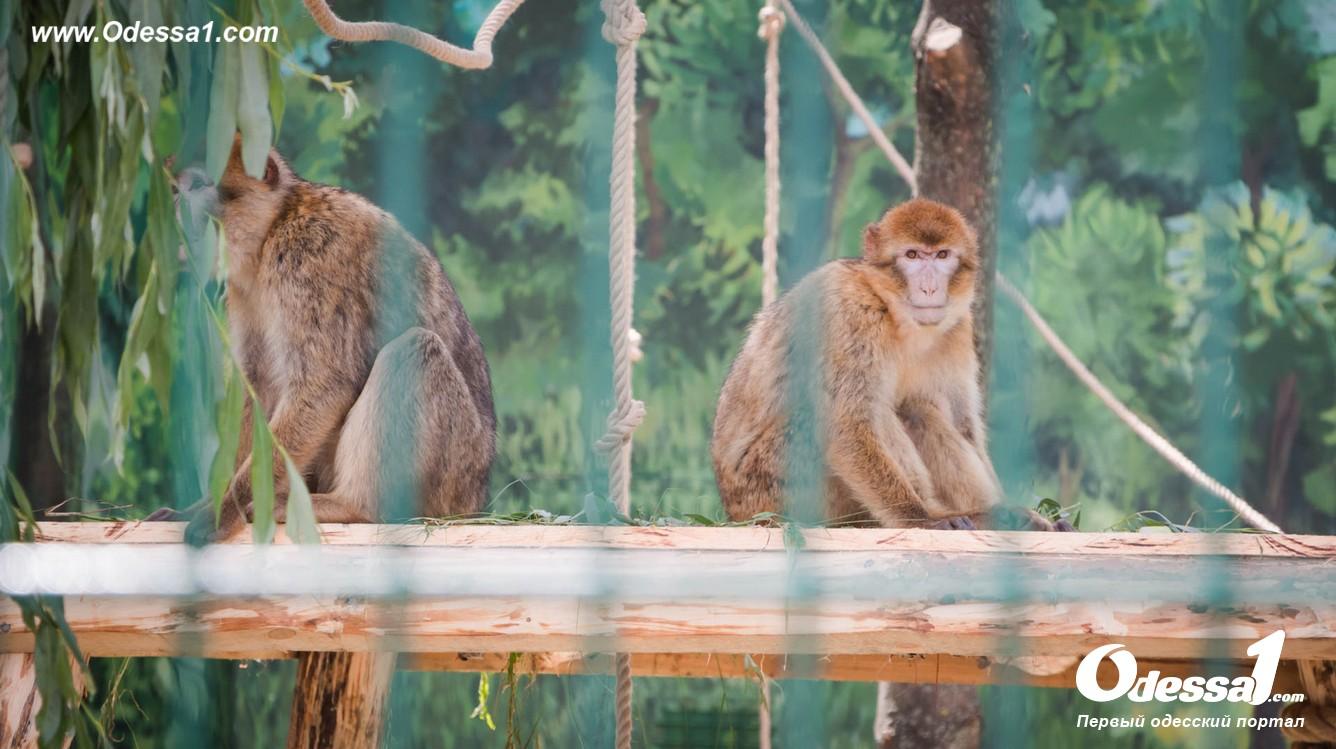 g-28-77089-4 В Одессе открылся уникальный зоологический парк (фото)