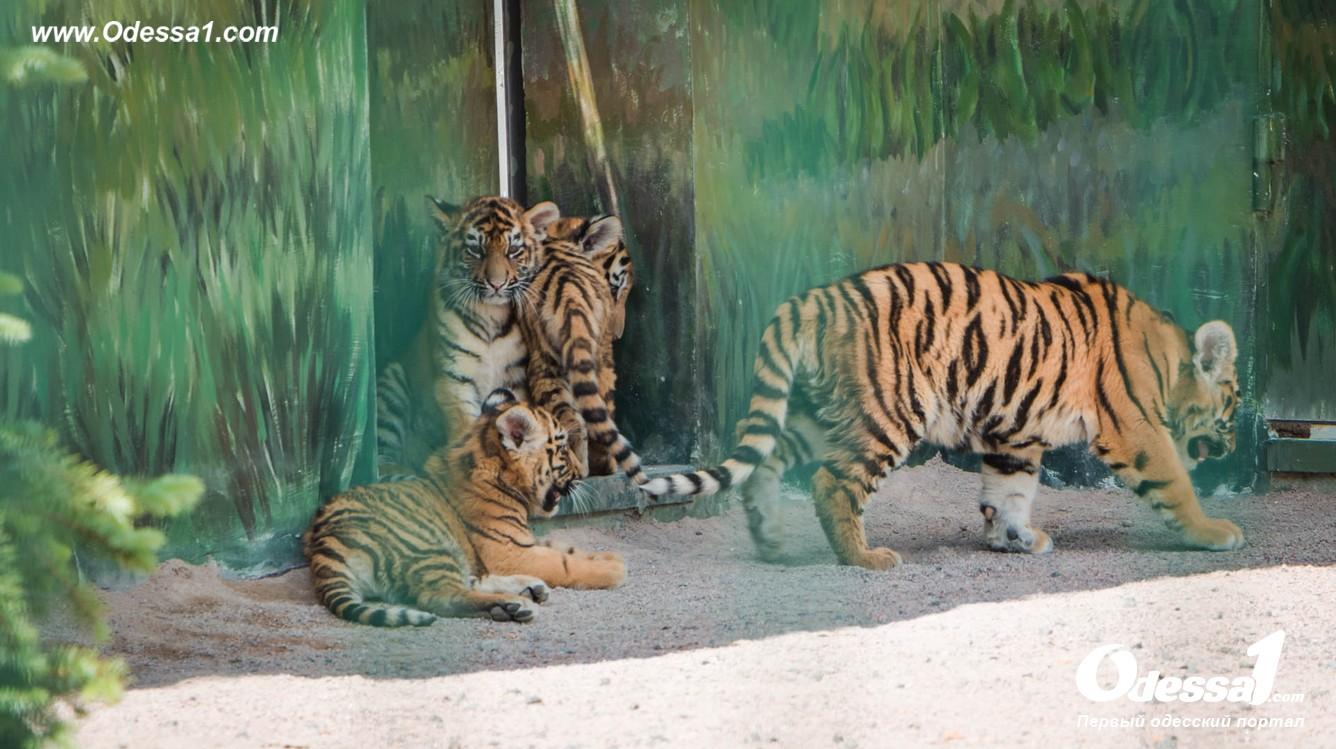 g-28-77089-9 В Одессе открылся уникальный зоологический парк (фото)