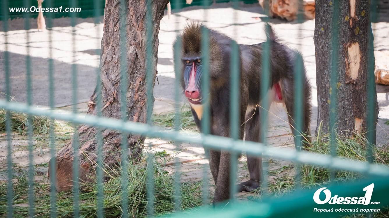 g-46-77089-1 В Одессе открылся уникальный зоологический парк (фото)