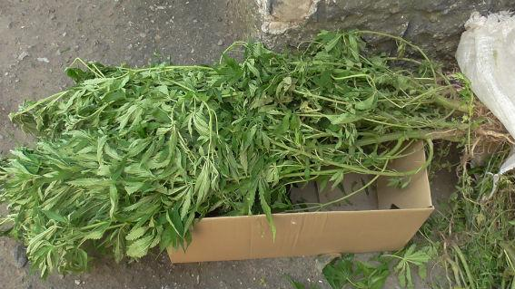 В Белгород-Днестровском р-не пенсионерка вместо картошки выращивала на огороде мак и коноплю (фото)
