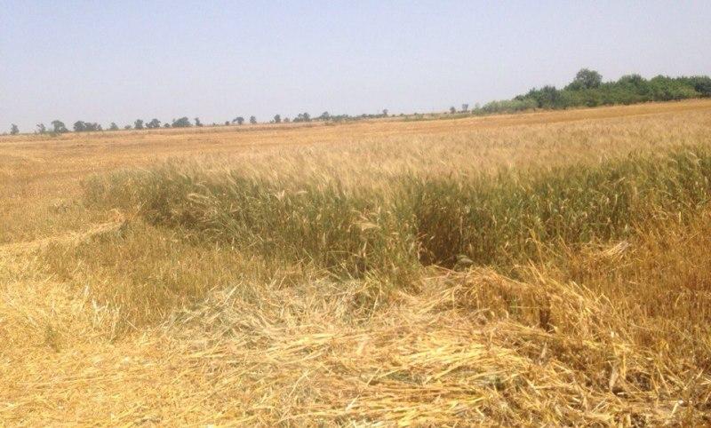 y9Lyt35cTUQ Измаильский р-н: в Новой Покровке вновь вспыхнула земельная война (фото, видео)