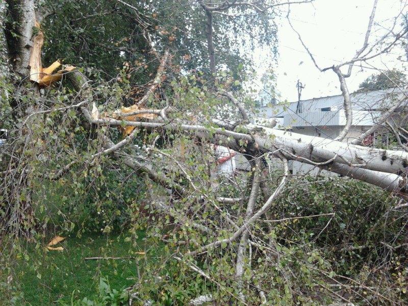J9q2EFnwUnM Шквальный ветер в Измаиле поломал деревья и пообрывал провода (ФОТО)