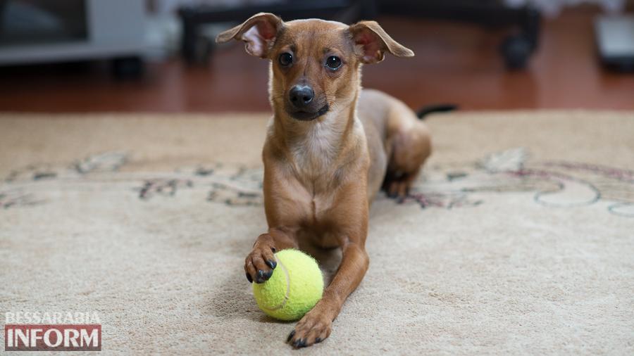 SME_1263 Фотоподборка с забавными измаильскими собаками