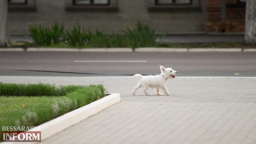 SME_1296 Фотоподборка с забавными измаильскими собаками