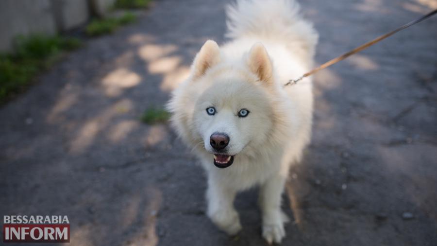 SME_3308 Фотоподборка с забавными измаильскими собаками