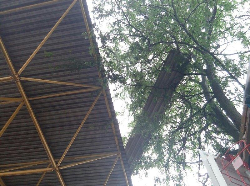 owJruBnEHJo Шквальный ветер в Измаиле поломал деревья и пообрывал провода (ФОТО)