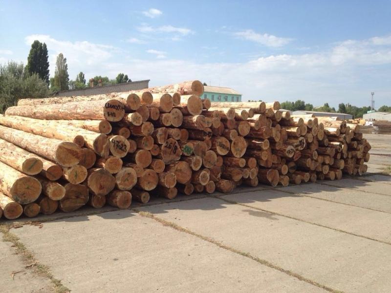 В Белгород-Днестровском районе правоохранители  выявили около 10 вагонов немаркированного леса-кругляка (ФОТО)