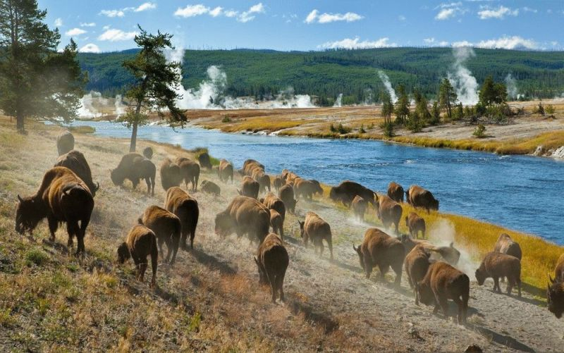 Yellowstone-Bizony Браконьеры перекрывали трассу Одесса-Рени
