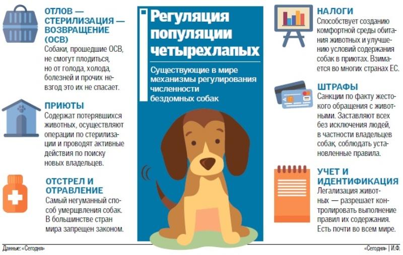 Собачье дело: почему Украина вошла в десятку лидеров по количеству бездомных животных и что с этим делать
