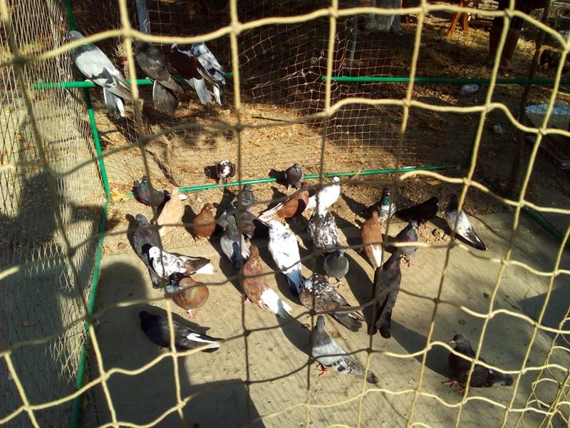 IMG_20160917_094946 Выставка-ярмарка домашних животных в Измаиле: коммерция и зрелище в одном флаконе (ФОТО)