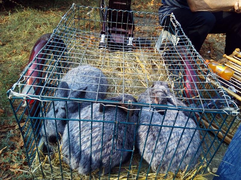 Выставка-ярмарка домашних животных в Измаиле: коммерция и зрелище в одном флаконе (ФОТО)