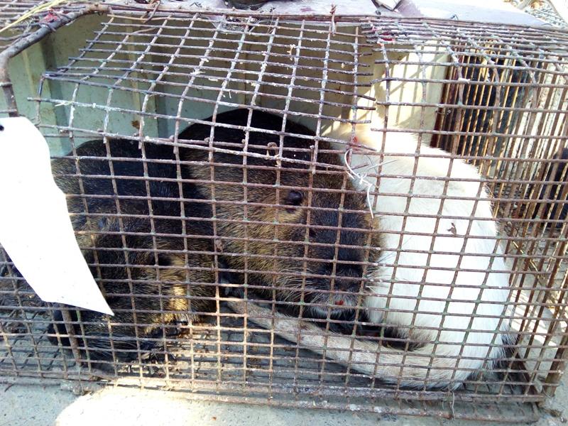 IMG_20160917_100311 Выставка-ярмарка домашних животных в Измаиле: коммерция и зрелище в одном флаконе (ФОТО)