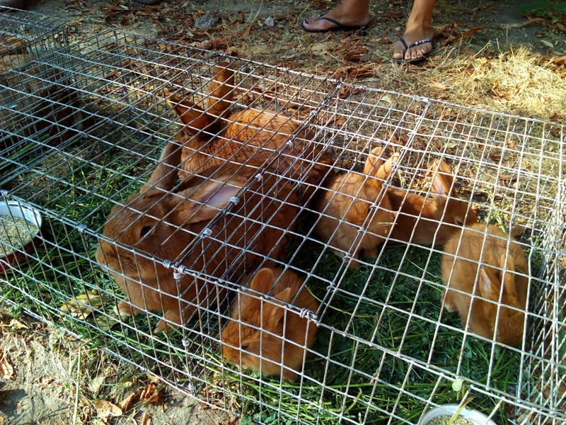 IMG_20160917_100515 Выставка-ярмарка домашних животных в Измаиле: коммерция и зрелище в одном флаконе (ФОТО)