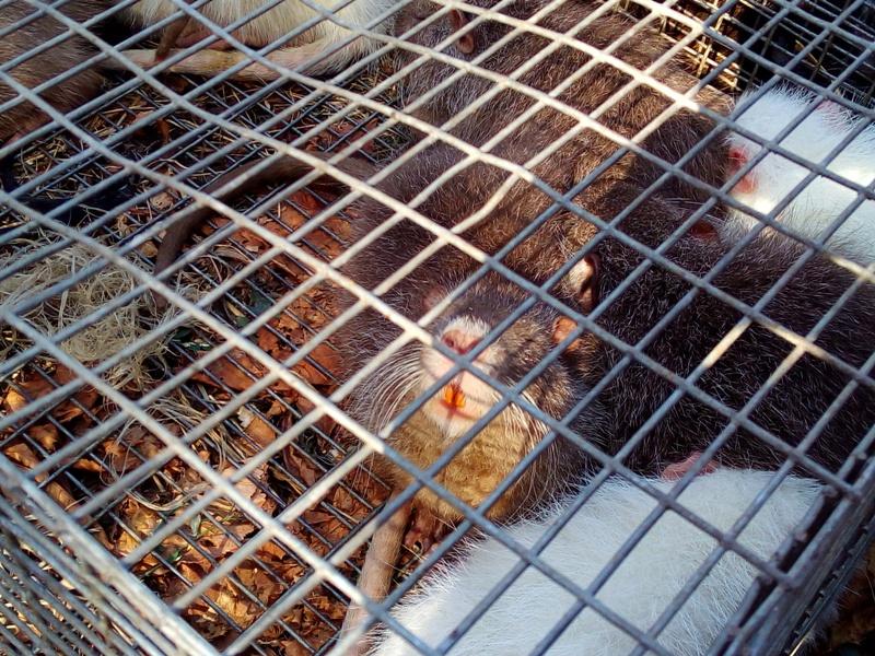 IMG_20160917_102713 Выставка-ярмарка домашних животных в Измаиле: коммерция и зрелище в одном флаконе (ФОТО)