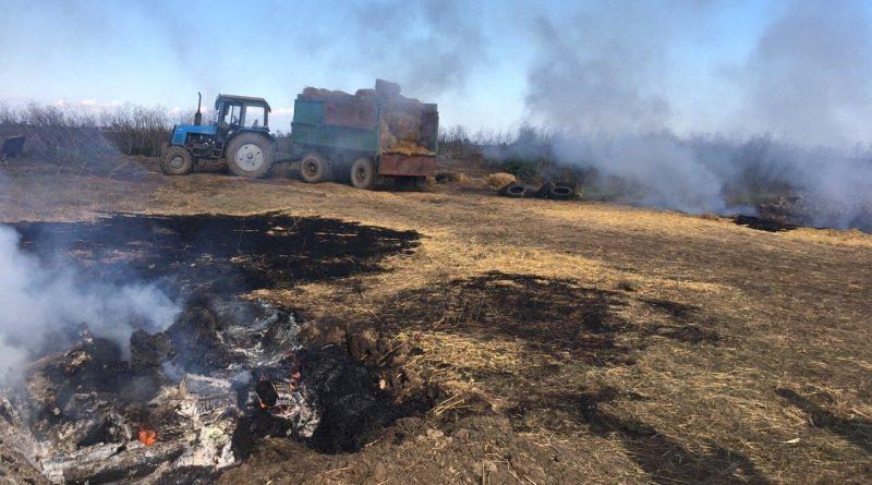 ACHS-Kilijskij-rajon-4 АЧС в Килийском районе: в Приморском приступили к сжиганию поголовья свиней (фото)