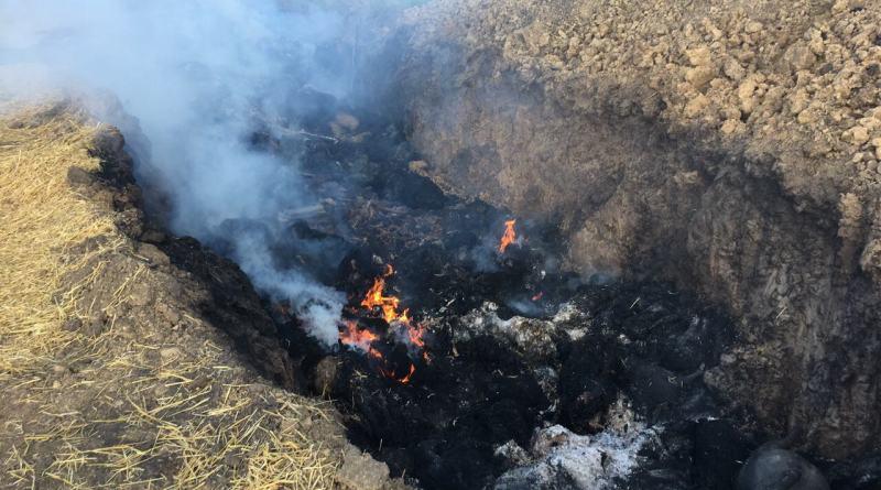 ACHS-Kilijskij-rajon3 АЧС в Килийском районе: в Приморском приступили к сжиганию поголовья свиней (фото)