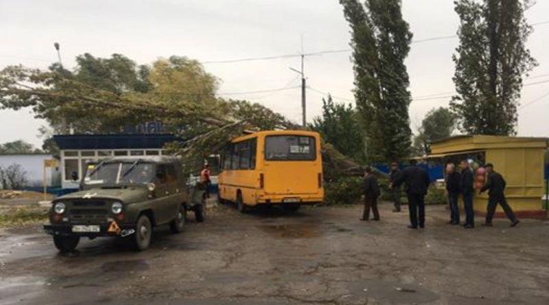 Derevo-upalo-na-marshrutku В Одессе упавшее дерево убило женщину (фото)