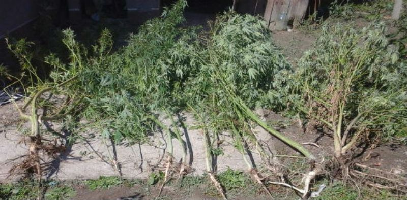 Житель Белгород-Днестровского района хранил на чердаке полкилограмма наркотиков