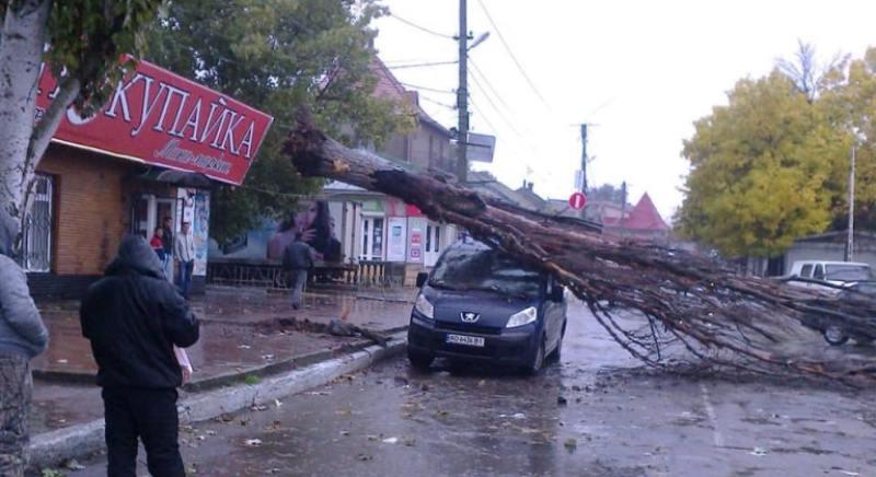 derevo-upalo-na-avtomobil В Одессе упавшее дерево убило женщину (фото)