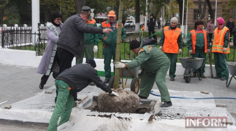 vysadka-derevev-Izmail Беспрецедентный проект: в Измаиле высаживают взрослые деревья (ФОТО)