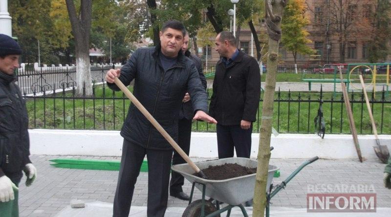 vysadka-derevev-Izmail1 Беспрецедентный проект: в Измаиле высаживают взрослые деревья (ФОТО)