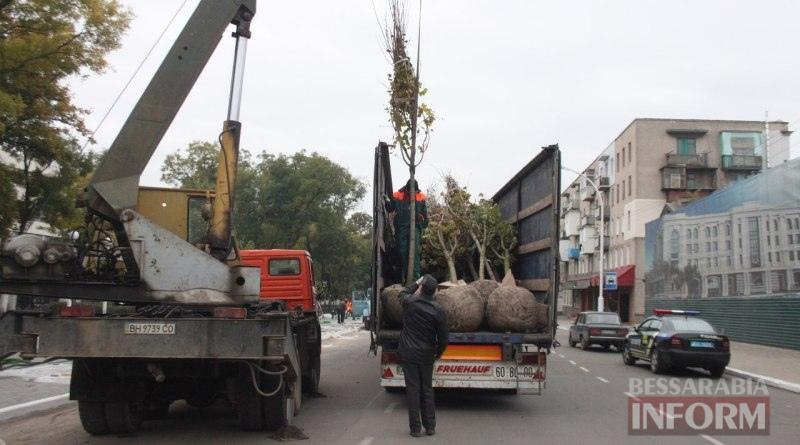 Беспрецедентный проект: в Измаиле высаживают взрослые деревья (ФОТО)