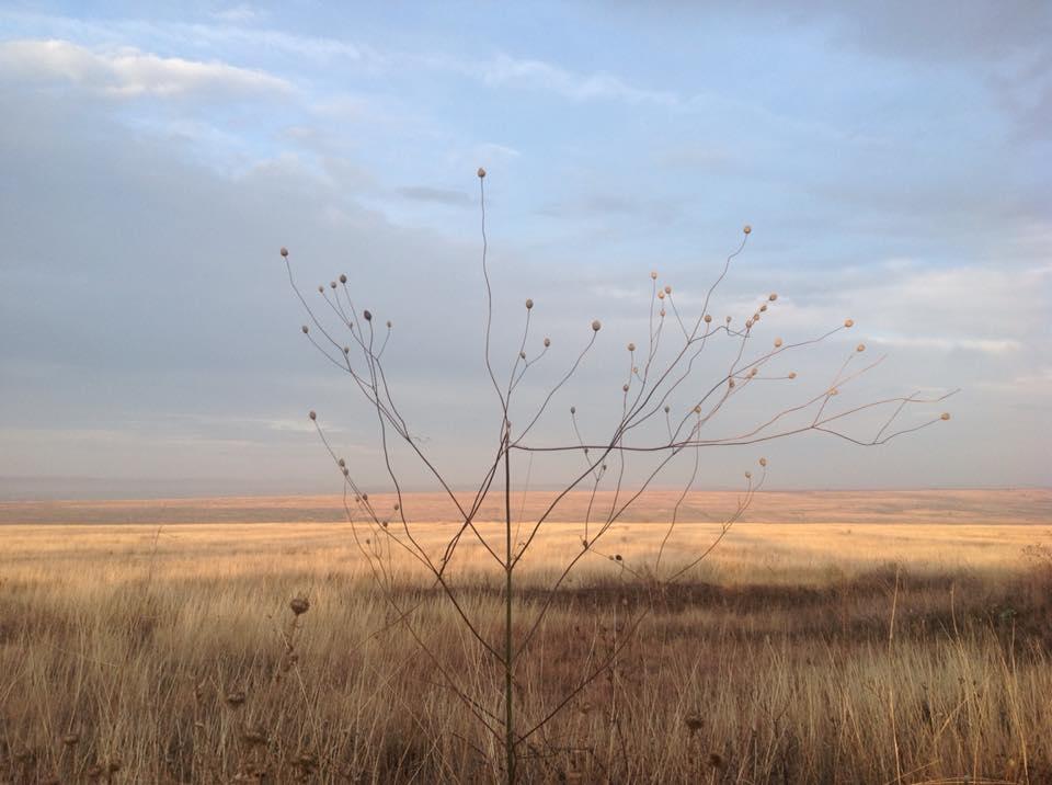 14938199_1589201027772390_6011245349032736638_n Убытки из-за уничтожения заказника «Тарутинская степь» уже превысили 60 млн. гривен - экологи