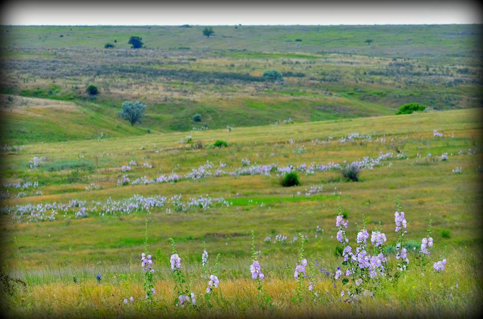 14947507_1150764058372984_5783297020969947206_n Убытки из-за уничтожения заказника «Тарутинская степь» уже превысили 60 млн. гривен - экологи