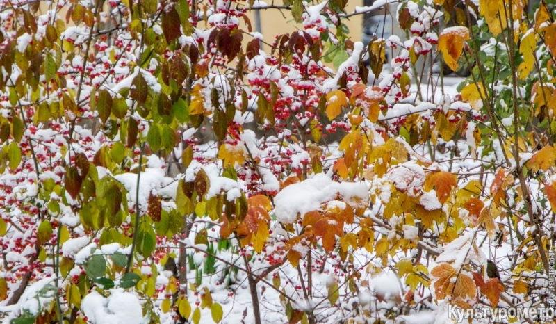DSC06968 Зима уже на пороге Бессарабии (фото)
