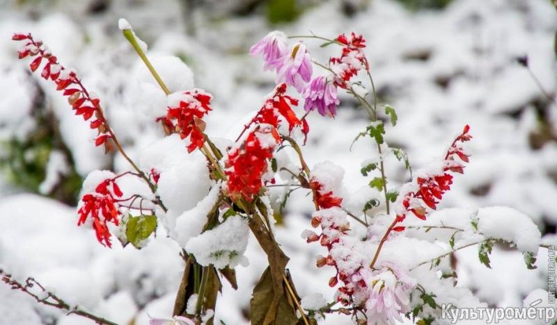 DSC06975 Зима уже на пороге Бессарабии (фото)