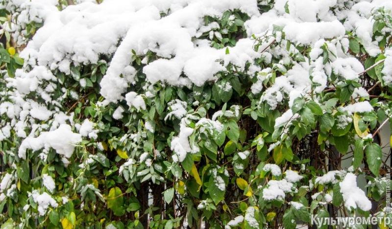 DSC06977 Зима уже на пороге Бессарабии (фото)