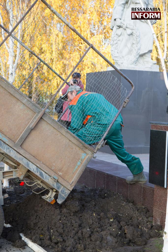 Посадка березок с нардепом: в Измаиле завершился первый этап высадки взрослых деревьев (ФОТО )